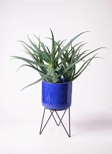 観葉植物 キダチアロエ 8号ビトロ エンデカ ブルー アイアンポットスタンド ブラック 付き