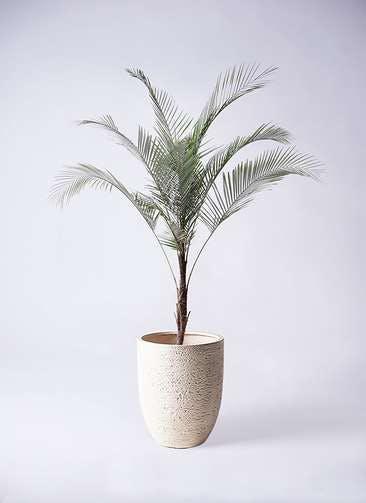 観葉植物 ヒメココス 8号 ビアスアルトエッグ 白 付き