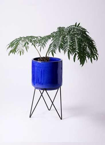 観葉植物 リュウビンタイ 8号 ビトロ エンデカ 鉢カバースタンド付 ブルー 付き