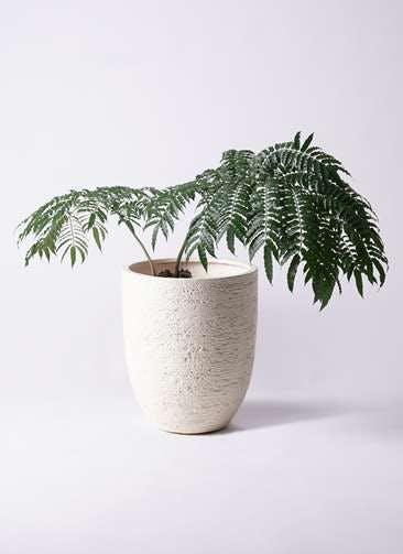 観葉植物 リュウビンタイ 8号 ビアスアルトエッグ 白 付き