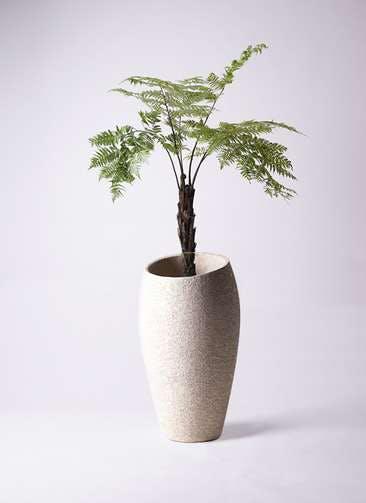 観葉植物 ヘゴ 8号 エコストーントールタイプ Light Gray 付き