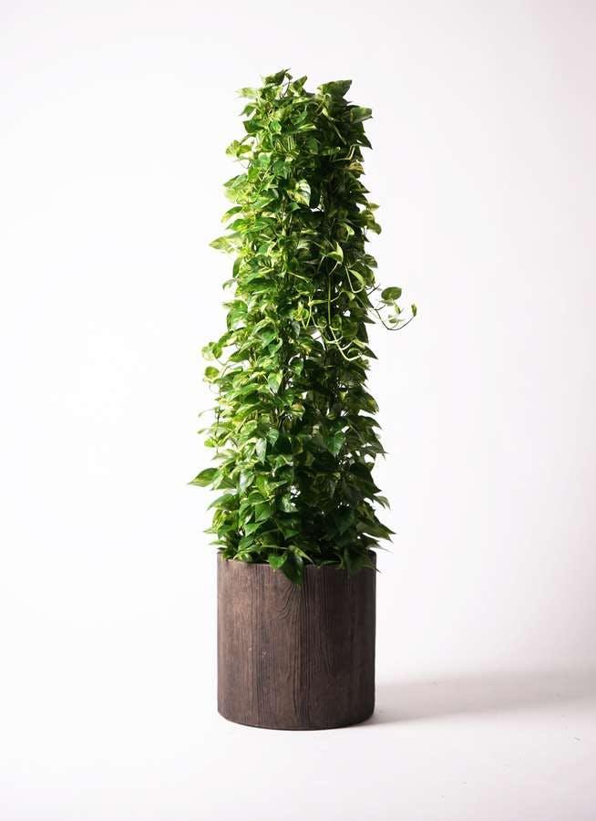 観葉植物 ポトス 10号 アルファシリンダープランター 付き