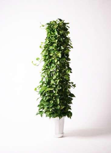 観葉植物 ポトス 10号 プラスチック鉢