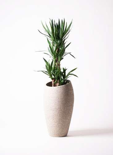観葉植物 ユッカ 8号 ノーマル エコストーントールタイプ Light Gray 付き