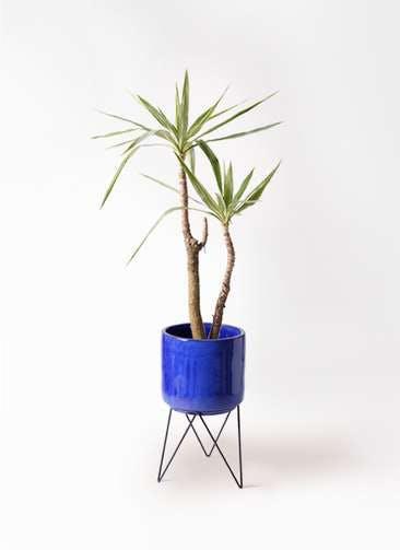 観葉植物 ユッカ 8号 斑入り ビトロ エンデカ ブルー アイアンポットスタンド ブラック 付き