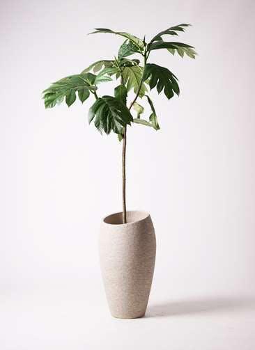 観葉植物 パンノキ 8号 エコストーントールタイプ Light Gray 付き