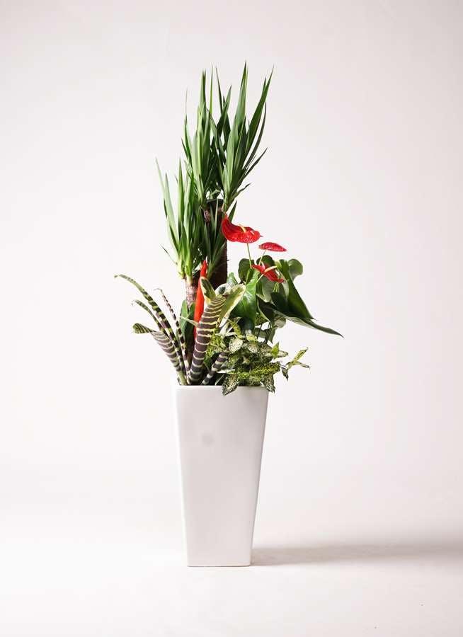 観葉植物 ユッカ 10号 寄せ植え 角高陶器