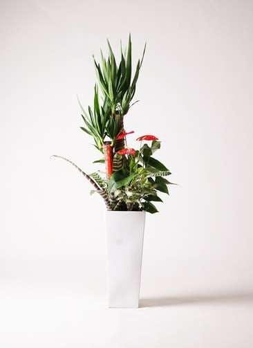 観葉植物 ユッカ 8号 寄せ植え 角高陶器