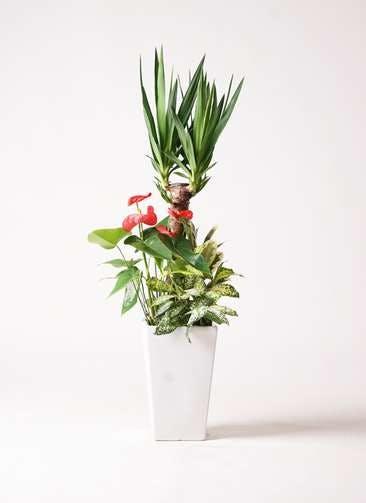 観葉植物 ユッカ 7号 寄せ植え 角陶器