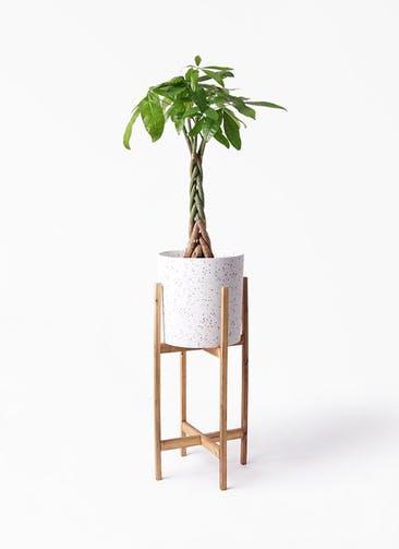 観葉植物 パキラ 6号 ねじり ホルスト シリンダー スパークルホワイト ウッドポットスタンド 付き