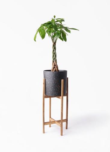 観葉植物 パキラ 6号 ねじり ホルスト シリンダー スパークルブラック ウッドポットスタンド 付き