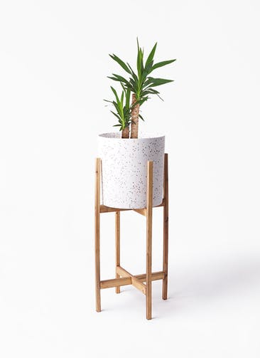 観葉植物 ユッカ 6号 ノーマル ホルスト シリンダー スパークルホワイト ウッドポットスタンド 付き