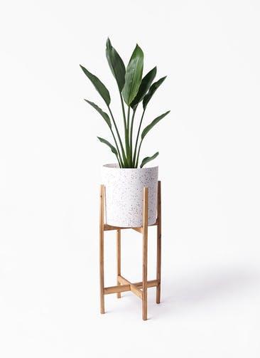 観葉植物 ストレリチア レギネ 6号 ホルスト シリンダー スパークルホワイト ウッドポットスタンド 付き