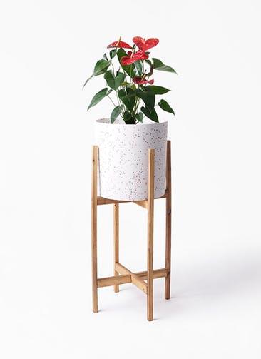 観葉植物 アンスリウム 6号 ダコタ ホルスト シリンダー スパークルホワイト ウッドポットスタンド 付き