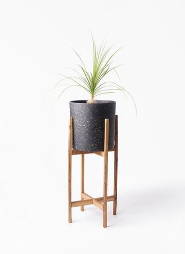 観葉植物 トックリラン 6号 ホルスト シリンダー スパークルブラック ウッドポットスタンド 付き