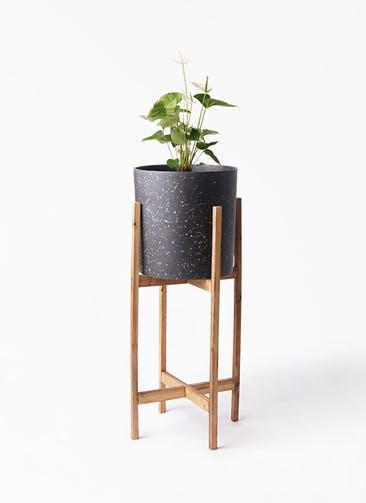 観葉植物 アンスリウム 6号 スミ ホルスト シリンダー スパークルブラック ウッドポットスタンド 付き