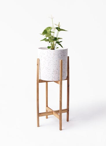 観葉植物 アンスリウム 6号 スミ ホルスト シリンダー スパークルホワイト ウッドポットスタンド 付き
