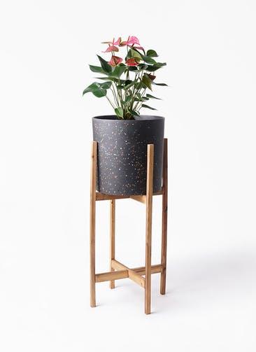 観葉植物 アンスリウム 6号 ピンクチャンピオン ホルスト シリンダー スパークルブラック ウッドポットスタンド 付き