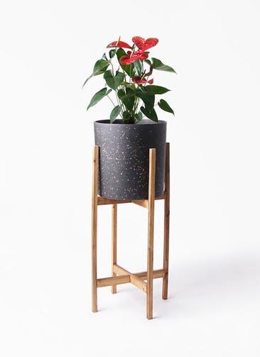 観葉植物 アンスリウム 6号 ダコタ ホルスト シリンダー スパークルブラック ウッドポットスタンド 付き