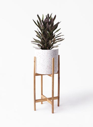 観葉植物 コルディリネ (コルジリネ) サンゴ 6号 ホルスト シリンダー スパークルホワイト ウッドポットスタンド 付き