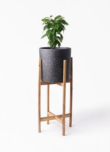 観葉植物 コーヒーの木 6号 ホルスト シリンダー スパークルブラック ウッドポットスタンド 付き