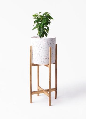 観葉植物 コーヒーの木 6号 ホルスト シリンダー スパークルホワイト ウッドポットスタンド 付き