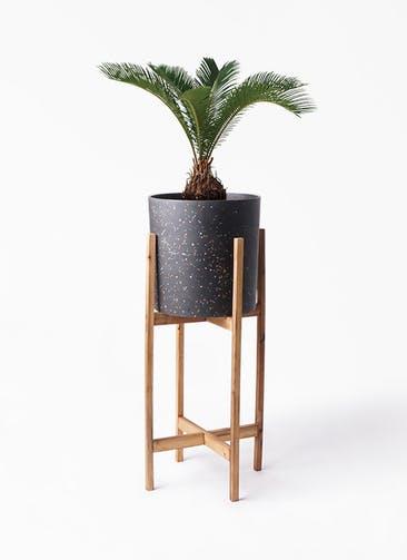 観葉植物 ソテツ 6号 ホルスト シリンダー スパークルブラック ウッドポットスタンド 付き