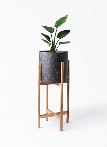 観葉植物 オーガスタ 6号 ホルスト シリンダー スパークルブラック ウッドポットスタンド 付き