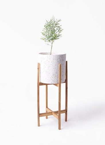 観葉植物 ユーカリ 6号 グニー ホルスト シリンダー スパークルホワイト ウッドポットスタンド 付き