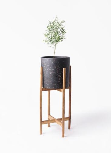 観葉植物 ユーカリ 6号 グニー ホルスト シリンダー スパークルブラック ウッドポットスタンド 付き