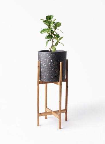 観葉植物 フィカス ベンガレンシス 6号 ストレート ホルスト シリンダー スパークルブラック ウッドポットスタンド 付き