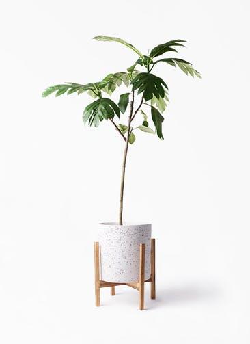 観葉植物 パンノキ 8号 ホルスト シリンダー スパークルホワイト ウッドポットスタンド 付き