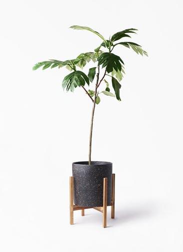 観葉植物 パンノキ 8号 ホルスト シリンダー スパークルブラック ウッドポットスタンド 付き