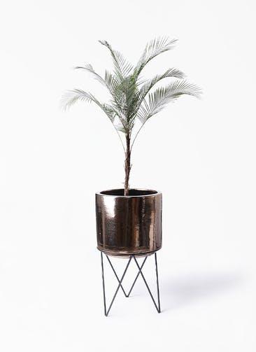 観葉植物 ヒメココス 8号 ビトロ エンデカ ゴールド アイアンポットスタンド ブラック  付き