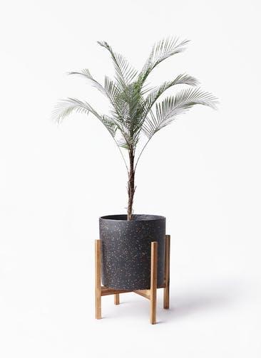 観葉植物 ヒメココス 8号 ホルスト シリンダー スパークルブラック ウッドポットスタンド 付き
