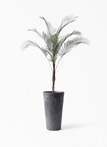 観葉植物 ヒメココス 8号 アートストーン トールラウンド ブラック 付き
