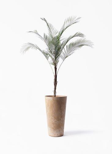 観葉植物 ヒメココス 8号 アートストーン トールラウンド ベージュ 付き