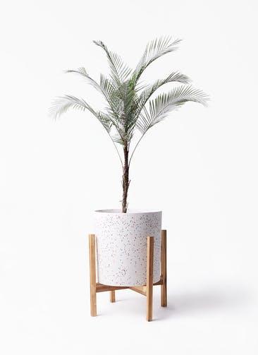 観葉植物 ヒメココス 8号 ホルスト シリンダー スパークルホワイト ウッドポットスタンド 付き