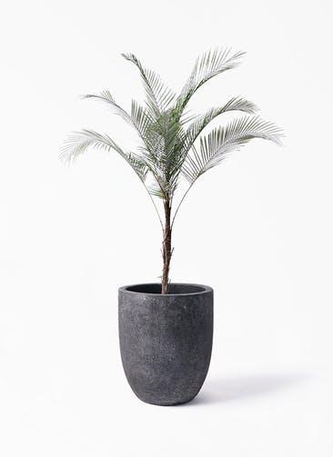 観葉植物 ヒメココス 8号 フォリオアルトエッグ ブラックウォッシュ 付き