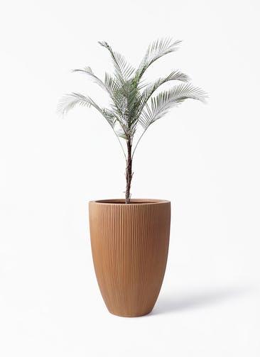 観葉植物 ヒメココス 8号 リブラ モノ ラスティ 付き