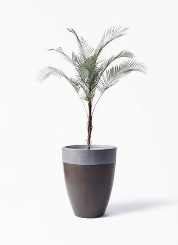 観葉植物 ヒメココス 8号 ファイバーストーン カプリ マッドブラウン 付き