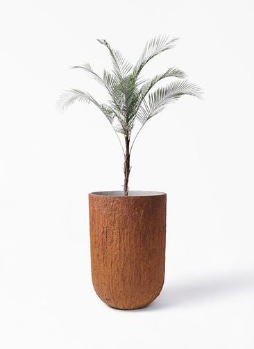 観葉植物 ヒメココス 8号 バル トール ラスティ 付き