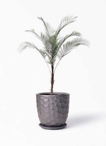 観葉植物 ヒメココス 8号 サンタクルストール ブロンズ 付き