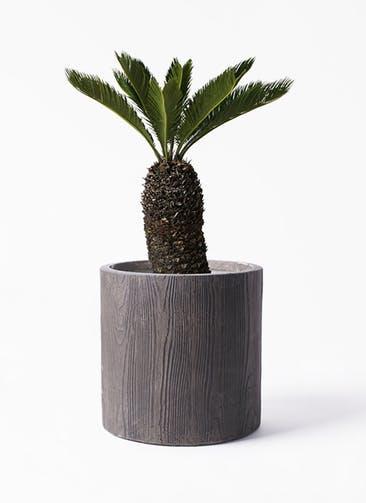 観葉植物 ソテツ 8号 アルファ シリンダープランター ウッド 付き