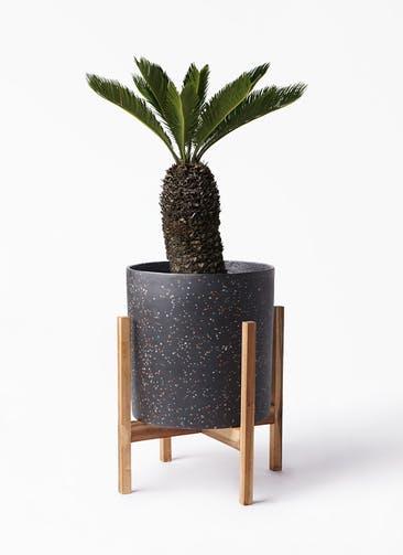 観葉植物 ソテツ 8号 ホルスト シリンダー スパークルブラック ウッドポットスタンド 付き