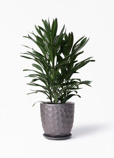 観葉植物 ドラセナ グローカル 8号 サンタクルストール ブロンズ 付き
