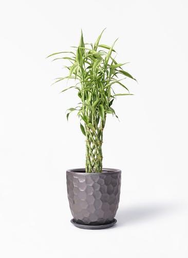 観葉植物 ドラセナ ミリオンバンブー(幸運の竹) 8号 サンタクルストール ブロンズ 付き