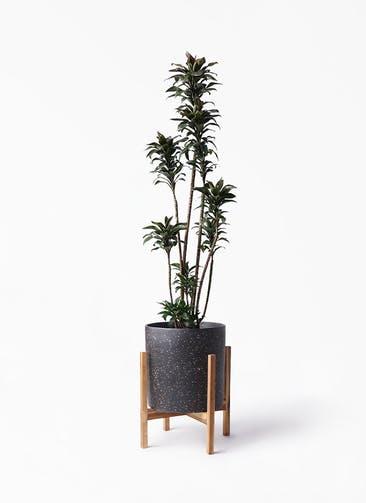 観葉植物 ドラセナ パープルコンパクタ 8号 ホルスト シリンダー スパークルブラック ウッドポットスタンド 付き