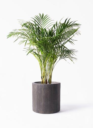 観葉植物 アレカヤシ 8号 アルファ シリンダープランター ウッド 付き