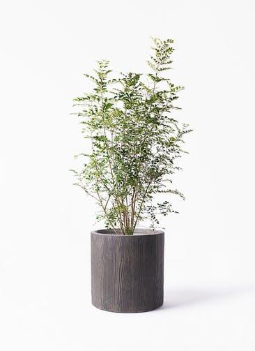 観葉植物 シマトネリコ 8号 アルファ シリンダープランター ウッド 付き